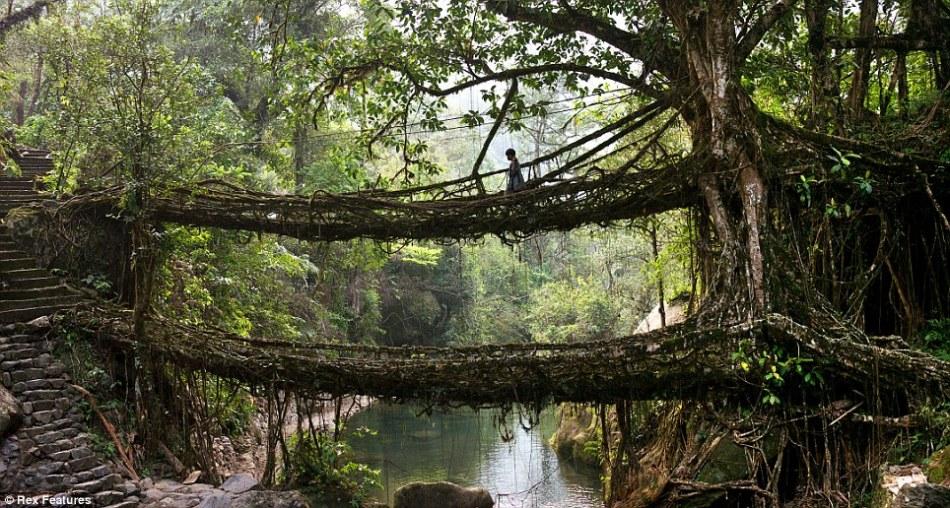 Natural bridges in Meghalaya jungle!