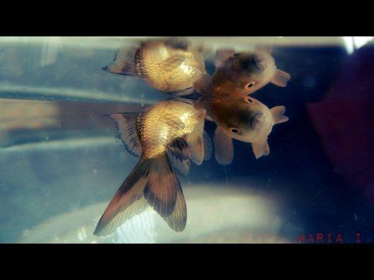 Deadfishes_ra