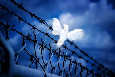 8242126-white-bird-sitting-on-barbed-wire-fence